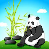 Panda eating Bamboo Stock Images