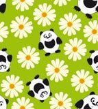 Panda en madeliefje. Royalty-vrije Stock Foto