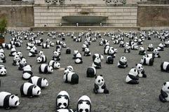 Panda en Roma Foto de archivo libre de regalías
