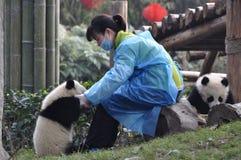 Panda et jeune fille en Chine Image stock