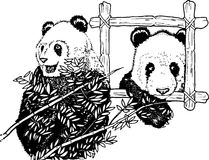 Panda Family. Two cute panda bears are sitting together Stock Photography
