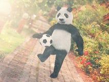 Panda football player. chasing soccer ball foot against backdrop Resort Thailand. juggling ball bear. character background paving Royalty Free Stock Photography