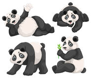 Panda in four different poses Stock Image