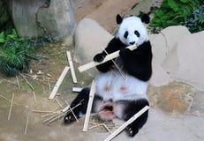 Panda Fu Wa détend images libres de droits