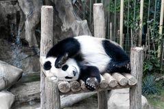 Panda géant dormant sur la plate-forme en bois au zoo Photographie stock libre de droits