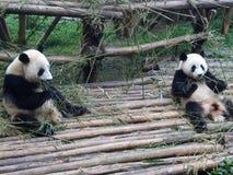 Panda géant en Chine Image stock