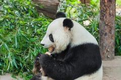 Panda gigante no parque fotos de stock