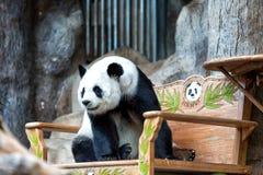 Panda gigante sulla sedia immagini stock libere da diritti