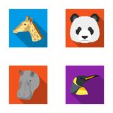 Panda, giraffe, hippopotamus, penguin, Realistic animals set collection icons in flat style vector symbol stock Stock Image