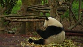 Panda grande metrajes