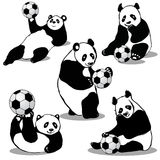 Panda Holds Soccer Ball Stock Image