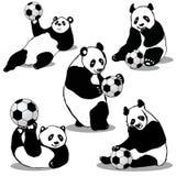 Panda Holds Soccer Ball Stock Image