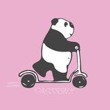 Panda in a hurry rides a scooter. Pink background Royalty Free Stock Image