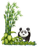 A panda Royalty Free Stock Photography