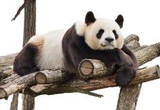 Panda isolated on white Stock Photos