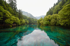 Panda lake of Jiuzhai Valley National Park. Panda lake has blue color water and surrounded by green forest Royalty Free Stock Images