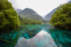 Panda lake of Jiuzhai Valley National Park Stock Photography