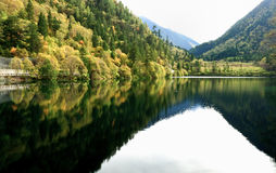 Panda lake jiuzhaigou national park sichuan Royalty Free Stock Images