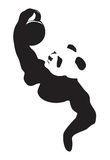 Panda lifting weight Stock Photography