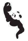 Panda lifting weight Stock Photography