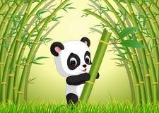 Panda linda dos en un bosque de bambú Fotos de archivo libres de regalías