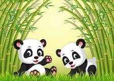 Panda linda dos en un bosque de bambú Fotos de archivo