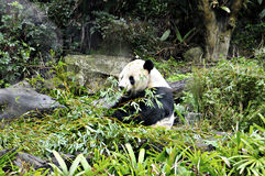 Panda. Located in Muzha, Taipei City Zoo is a few minutes' walk from the Taipei City Zoo MRT Station. It is considered as one of the largest zoos in Asia with stock photography