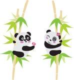 Panda Love. Two cute panda with cin Royalty Free Stock Image