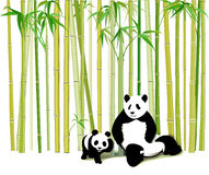 Panda mother and child  Stock Photos