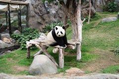 Panda na drewnianej platformie Zdjęcia Royalty Free