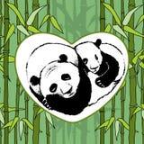 Panda på bambubakgrund Arkivfoto