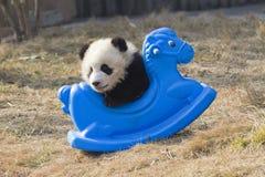 Panda Play Cockhouse Fotografia Stock