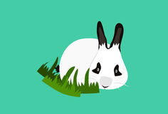 Panda Rabbits Stock Photo