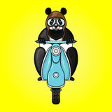 Panda racer in helmet on scooter. Hand drawn  illustration Royalty Free Stock Photo