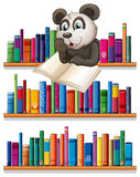 A panda reading above the wooden shelf with books Stock Images
