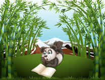 A panda reading at the hilltop with bamboos Royalty Free Stock Photos