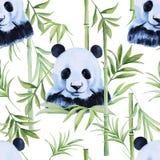 Panda sömlös modell för bambu isolerat Tropisk vattenfärg Arkivfoto