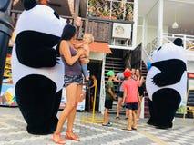 Panda's op de dijk in de Krim stock afbeelding