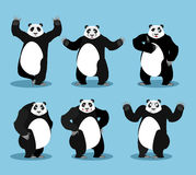 Panda set. Chinese bear variety of poses. Animal expression of e Stock Images