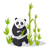 Panda Sitting between Bamboo Holds Green Leaves Stock Images