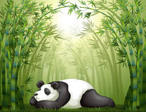 A panda sleeping between the bamboo trees Stock Images