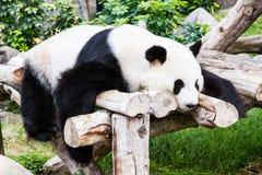Panda. Royalty Free Stock Images