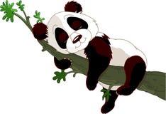 Panda som sovar på en filial Royaltyfri Foto