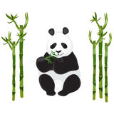 Panda with a sprig of bamboo on white. Bamboo stalks. Vector illustration Royalty Free Stock Photos