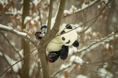 Panda. Toy on a tree in the woods enjoying the winter idyll Stock Images