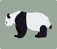 Panda Stock Photos