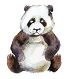 Panda, watercolor. Giant panda isolated on white background, watercolor illustration Stock Images