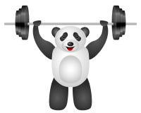 Panda weight Stock Photography