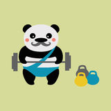 Panda weightlifter. Baleen Panda athlete with a barbell Stock Images