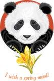 Panda with yellow crocuses Royalty Free Stock Image